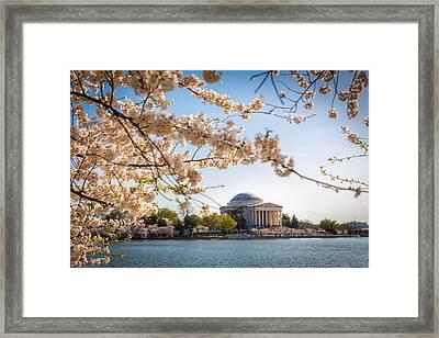 Cherry Blossoms Framed Print by Robert Davis