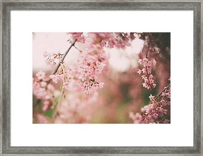 Cherry Blossoms Framed Print by Tracy  Jade