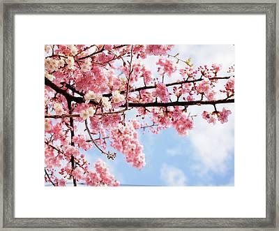 Cherry Blossoms Under Blue Sky Framed Print by Neconote