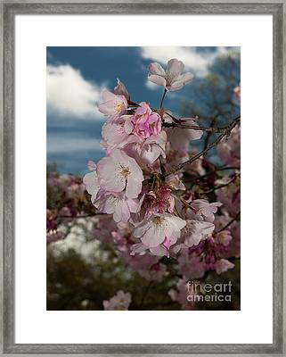 Cherry Blossoms Vertical Framed Print