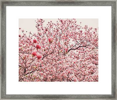 Cherry Blossoms Framed Print by Vivienne Gucwa