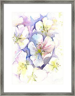 Cherry Blossoms Watercolor Framed Print by Olga Shvartsur