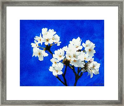 Cherry Blossoms Framed Print by William  Nelson