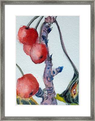 Cherry Branch Framed Print by Mindy Newman