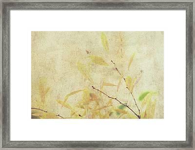 Cherry Branch On Rice Paper Framed Print