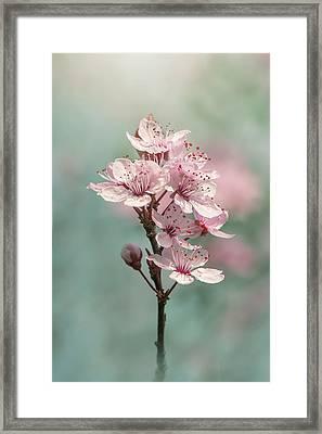 Cherry Clouds Framed Print by Jacky Parker