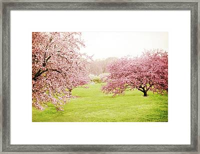 Cherry Confection Framed Print by Jessica Jenney