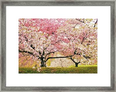 Cherry Delight Framed Print by Jessica Jenney