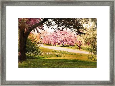 Cherry Hill Grove Framed Print by Jessica Jenney