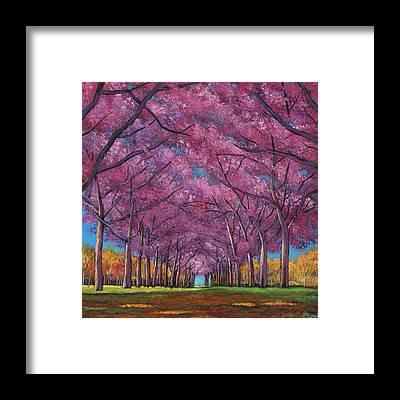 Cherry Tree Framed Prints