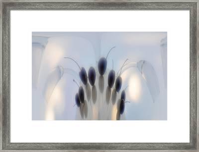 Cherry Framed Print by larisa Fedotova