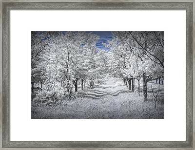Cherry Orchard Roadway In Infrared Framed Print by Randall Nyhof