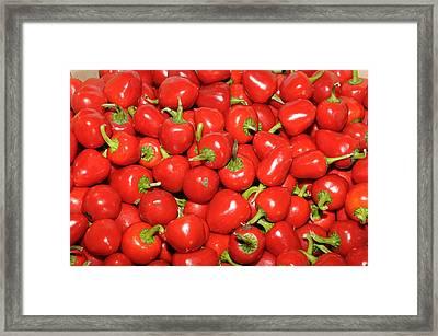 Cherry Peppers Framed Print