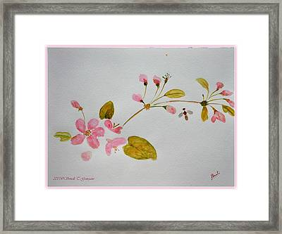 Cherry Pink Framed Print