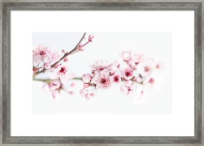 Cherry Spring Framed Print by Rebecca Cozart