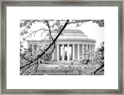 Cherry Tree And Jefferson Memorial Elegance  Framed Print by Olivier Le Queinec