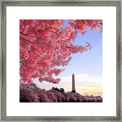 Cherry Tree And The Washington Monument  Framed Print by Olivier Le Queinec