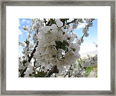 Framed Print featuring the photograph Cherry Tree by Cendrine Marrouat