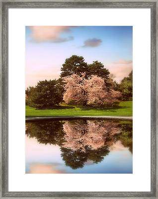 Cherry Tree Fountain  Framed Print