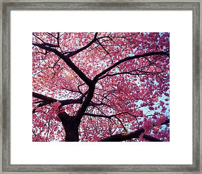 Cherry Tree Framed Print by Mitch Cat