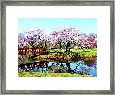 Cherry Trees In The Park Framed Print