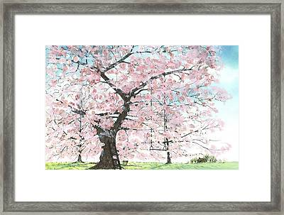 Cherry Trees Framed Print by Patrick Grills
