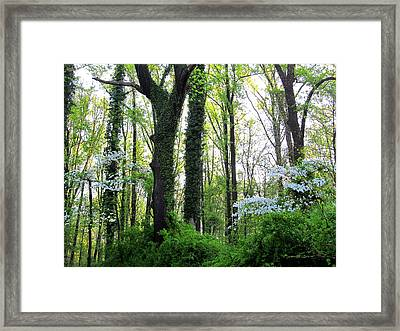 Chesapeake Oldgrowth Forest Framed Print