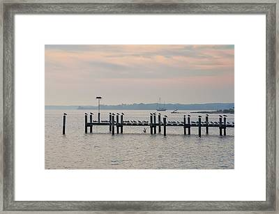 Chesapeake Seagulls Framed Print by Bill Cannon
