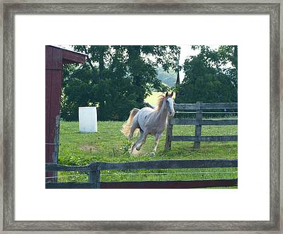 Chester On The Run Framed Print by Donald C Morgan