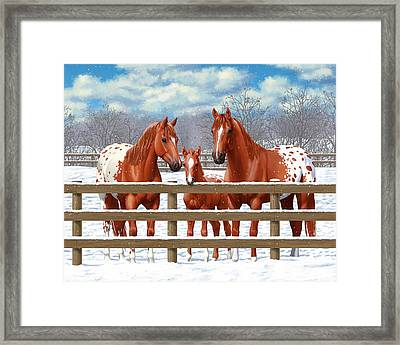 Chestnut Appaloosa Horses In Snow Framed Print by Crista Forest