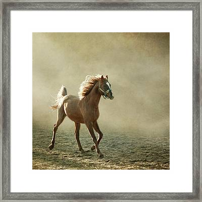 Chestnut Arabian Horse Framed Print by Christiana Stawski