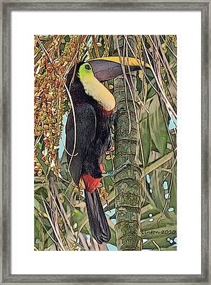 Chestnut-billed Toucan Framed Print