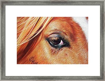 Chestnut Close-up Framed Print by Elena Kolotusha