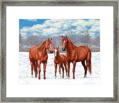 Chestnut Horses In Winter Pasture Framed Print by Crista Forest