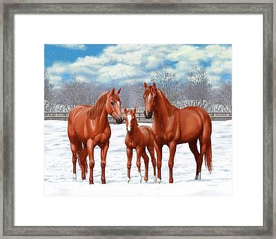 Chestnut Horses In Winter Pasture Framed Print