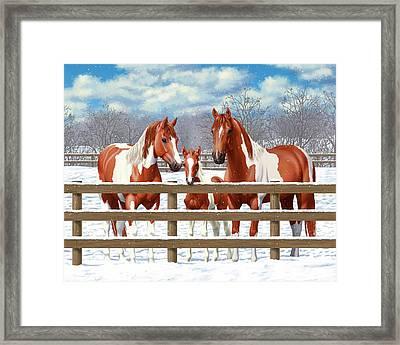 Chestnut Paint Horses In Snow Framed Print