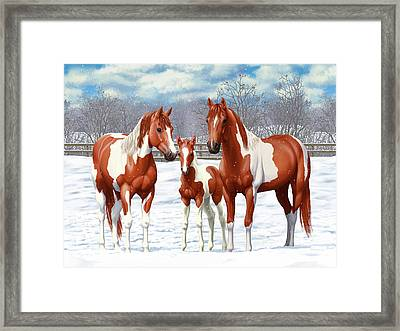 Chestnut Paint Horses In Winter Pasture Framed Print by Crista Forest