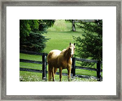 Chestnut Framed Print by Scott Hovind