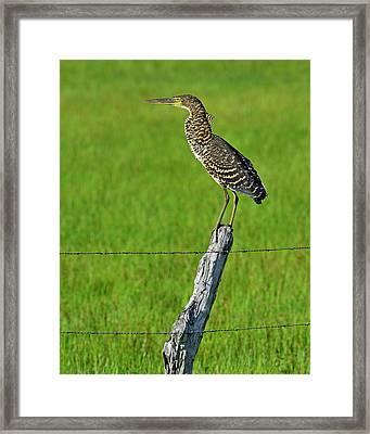 Chevron Framed Print by Tony Beck