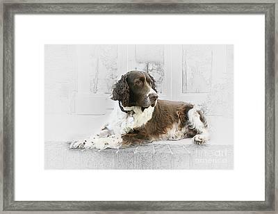 Chewbacca Island Prince Framed Print by Sari Sauls