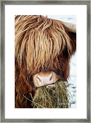 Chewing The Cud Framed Print by Tim Gainey