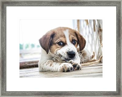 Chewing The News Framed Print