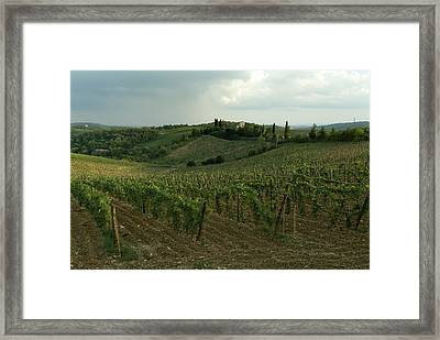 Chianti Vineyards In Tuscany Framed Print by Todd Gipstein