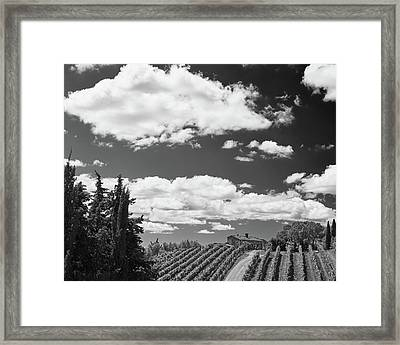 Chianti Vineyards Framed Print by Richard Goodrich