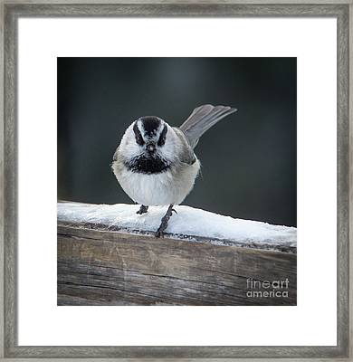 Chic At Big Springs Wildlife Art By Kaylyn Franks Framed Print