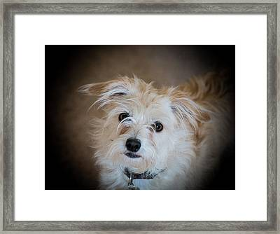 Chica On The Alert Framed Print