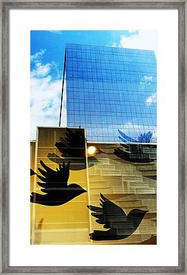 Chicago Birds Framed Print by Todd Sherlock