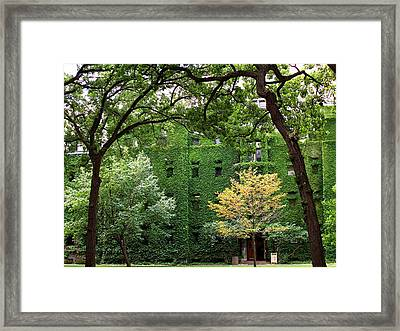 Chicago Campus Framed Print by Caroline  Urbania Naeem