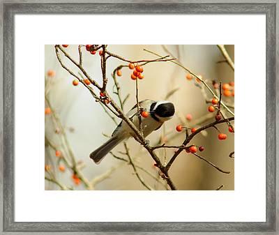 Chickadee 1 Of 2 Framed Print