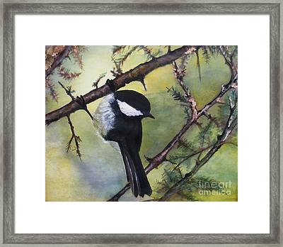 Chickadee Autumn Framed Print by Sibby S